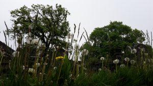 Edinburgh Friedhof und Blumenwiese